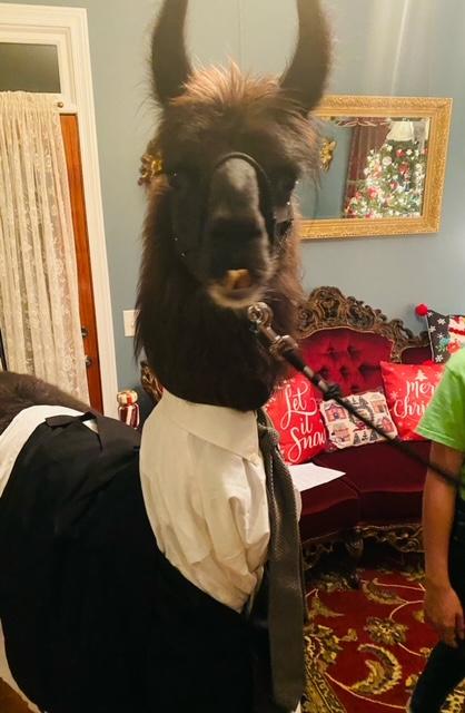 Onyx the llama